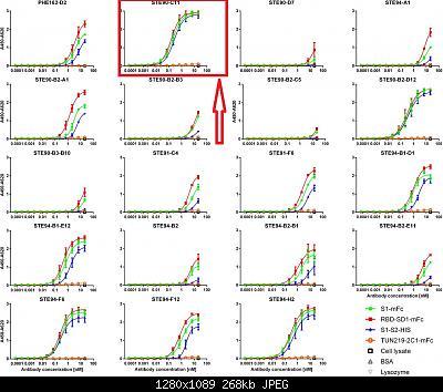 Nuovo Virus Cinese-f2.large.jpg