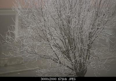 Nowcasting Emilia - Basso Veneto - Bassa Lombardia, 16 Gennaio - 31 Gennaio-img_5515.jpg