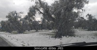 Foto neve 13/14 febbraio 2021-20210215_084200.jpg