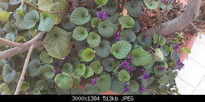 Nowcasting Vegetale 2021-20210223_134637.jpg