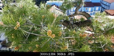 Nowcasting Vegetale 2021-20210317_081025.jpg