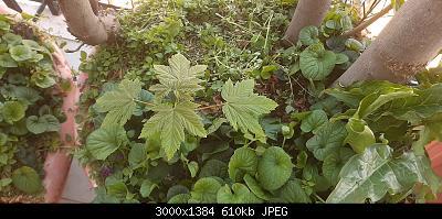 Nowcasting Vegetale 2021-20210328_102610.jpg