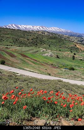 Catena del Libano - Situazione neve attraverso le stagioni-181096285_4276945478985043_8374254453310363152_n.jpg