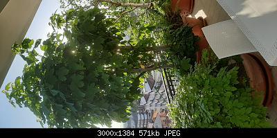 Nowcasting Vegetale 2021-20210509_065246.jpg