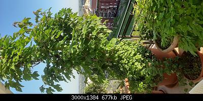 Nowcasting Vegetale 2021-20210509_065227.jpg