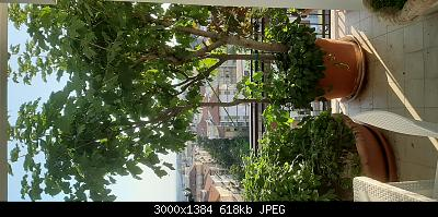 Nowcasting Vegetale 2021-20210618_063912.jpg
